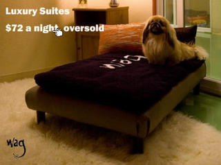 Cats_dogs_hotels
