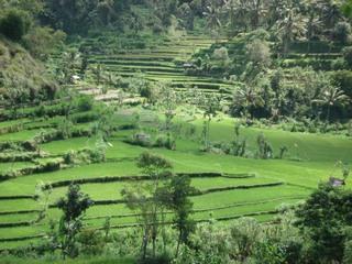 Bali_292